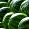 IOT IN THE GREENHOUSE: against the diseases and parasites of watermelons